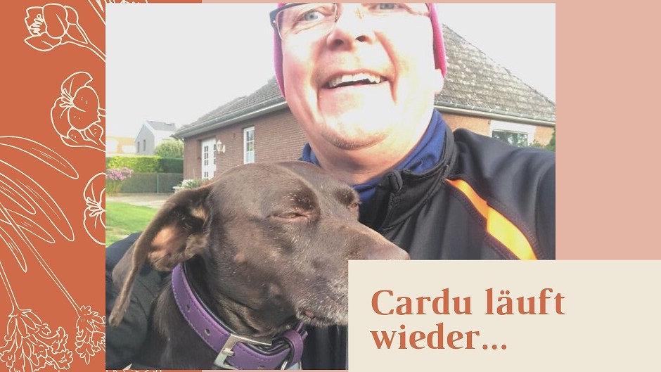 Uploads from Burkhard Huber-Cardu