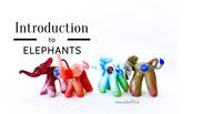Demo 3 Animals 1 Introduction To Elephants
