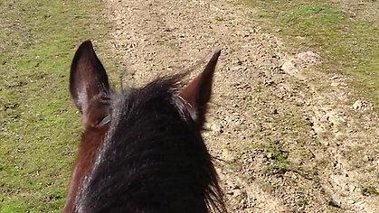 Dusty on a training ride