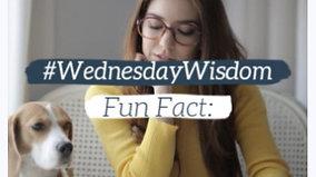 Fun fact engagement videos