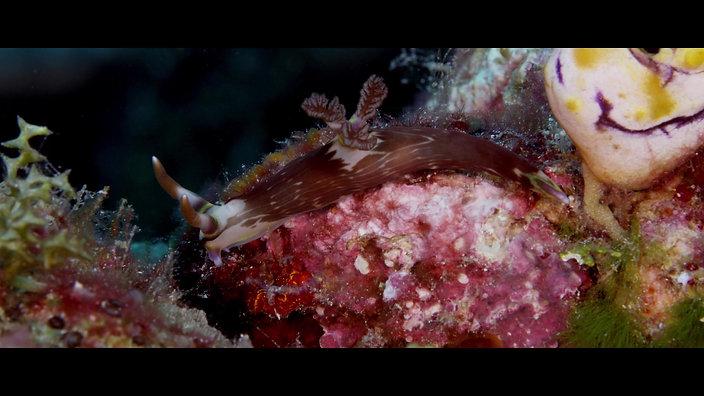 Underwater Critters