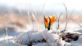 Free reading - Imbolc February 1st