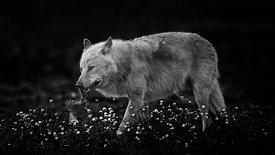 Trailer: Von Eulen, Bären und Wölfen