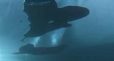 Eistauchen Silvaplanersee