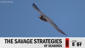 The Savage Strategies of Seabirds