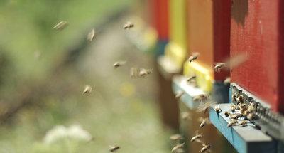 Bee Farm (1)