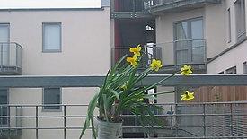 The Balcony 2006