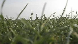 On Grass 2007