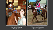 Introducing the Purebred Arabian Racehorses from Australia 1