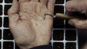 Plantenkwekerij Gitzels Documentary