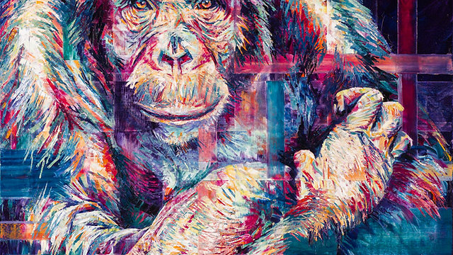 Chimpanzee Gaze, by Hannah Shergold, oil on canvas, 90 x 90 cm