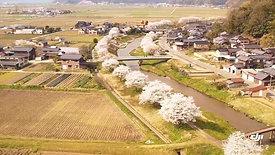 六方川桜並木