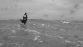 填海 Flying