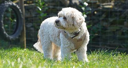 Rochdale Dog Walking Promo!