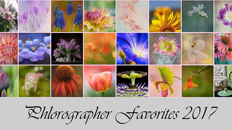 Phlorographers_Favorites_2017_Floral_Photography_from_Around_the_World