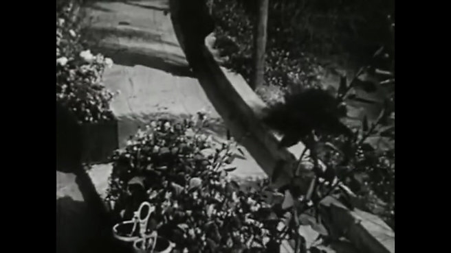 Meshes of the Afternoon  (1943)  / Maya Deren