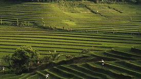 Exploring NIKKOR Lenses: Bali - Teaser