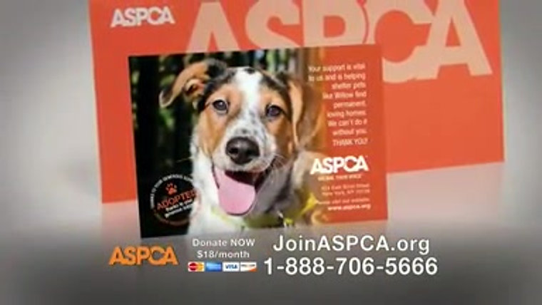 1.  ASPCA, 'In the Bleak Midwinter', Christmas season 2014 and 2015