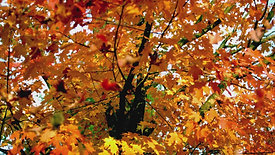 Autumn Escape Volume Two