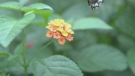 Birds Bees & Butterflies Volume One