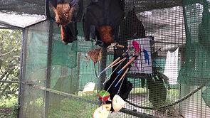 Bats Painting!
