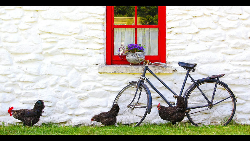 Irish Grass