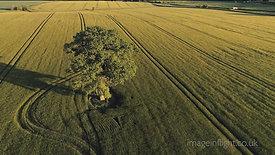 TREE UPPER HEYFORD OXFORDSHIRE