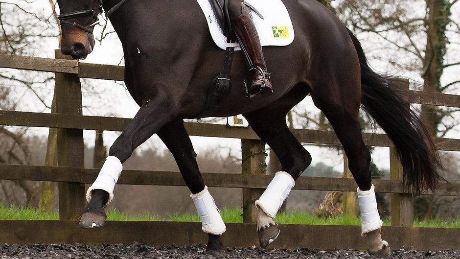 equestrianX - Video Channel