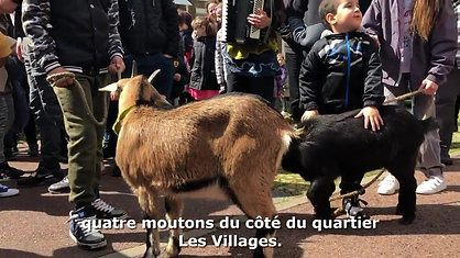 Des_chevres_et_des_brebis_en_transhumance_dans_les_rues_de_Meru-z5uzq0
