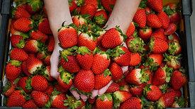 Lolofresh Fruits