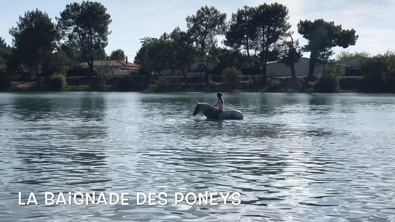 Baignade des poneys
