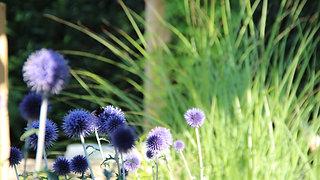ZO. Tuinontwerp | natuurlijke tuin Helmond