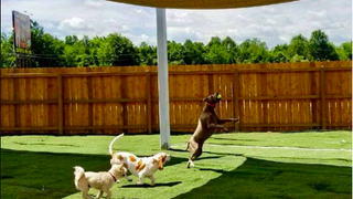 Medlin Pet Company - Dog Daycare Center