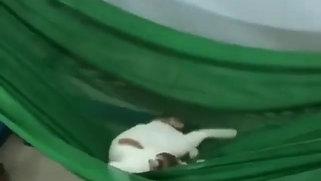 Cat Video 6
