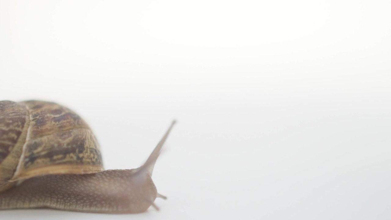 Peconic Escargot