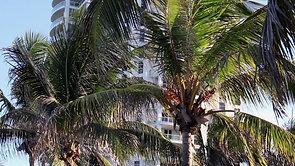 Miami - Day 1