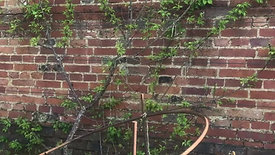 Fruit Tree Border