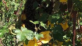 Vegetable Garden - Late Spring Virtual Open Day