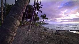 Mauna Lani Tree Beach h.264 HD