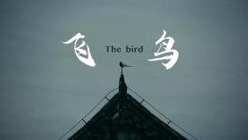 The Bird 飞鸟|short film