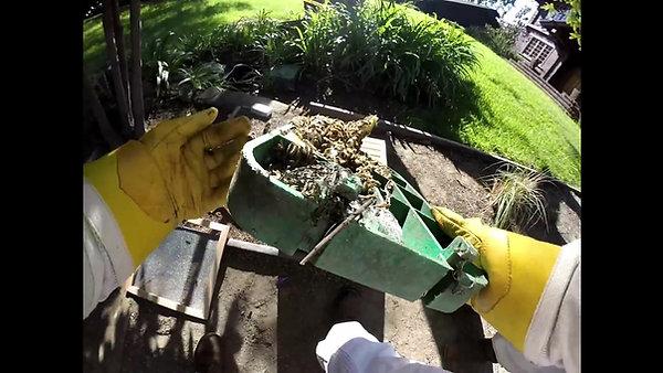 Mr. Cross & Ms. Kiphart Save the Honeybees