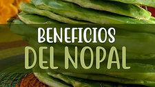 Beneficios del Nopal