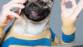 Top Dog Social - Mystery