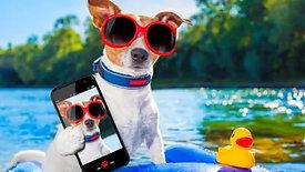 Top Dog Social - Holiday