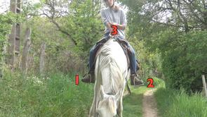 L'équilibre du cavalier : la suspension 3 points