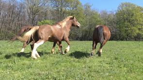"""La """"peur"""" du cheval : 1-accepter le naturel"""