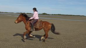 Nos chevaux, partenaires de votre aventure... ou de votre vie!