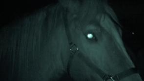 La vision du cheval : vision nocturne