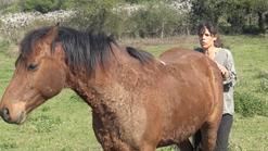 La vision du cheval : les bases