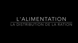 L'alimentation : la distribution de la ration